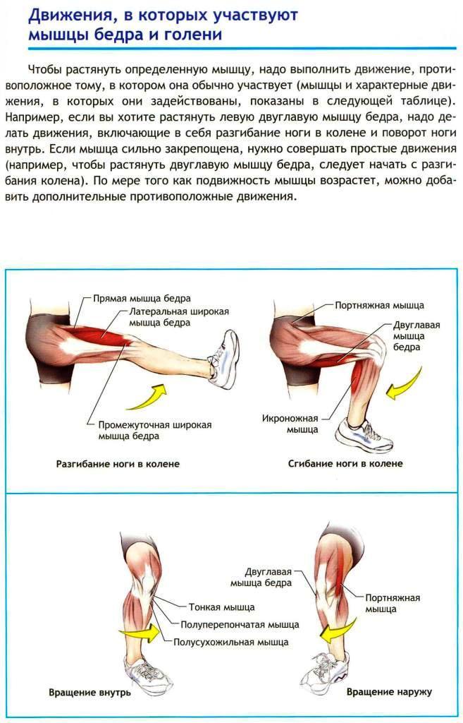 Чем разогреть мышцу в домашних условиях