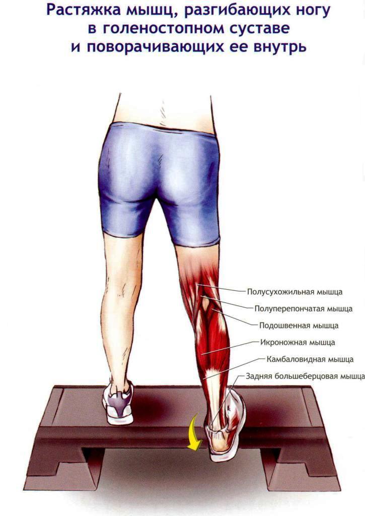 мышцы коленного и голеностопного сустава