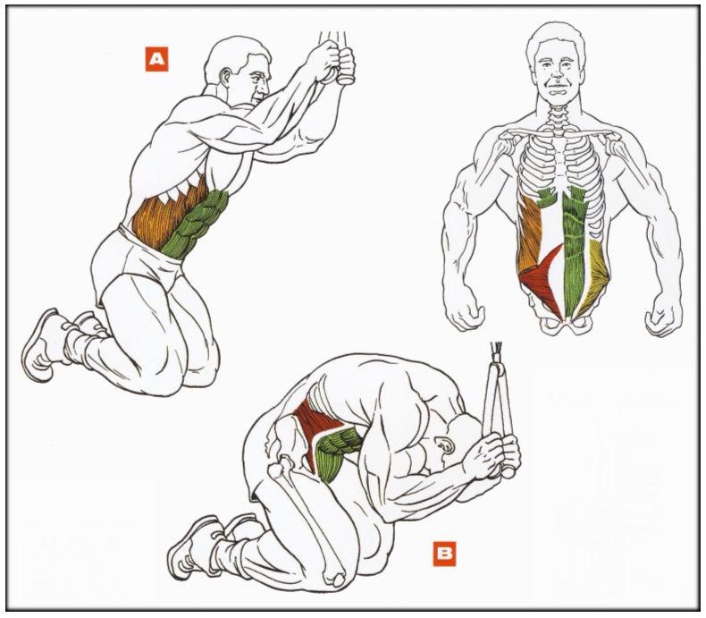 Тренировки для накачки всех мышц в домашних условиях 98