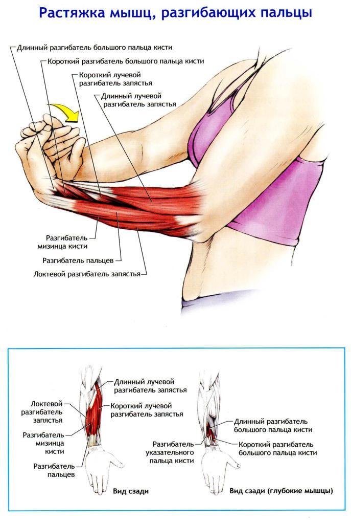 Как растянуть мышцы в домашних условиях фото